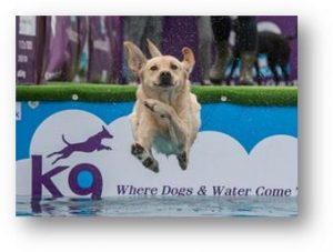 Flying dog at Dogfest