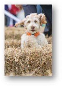 Dog enjoying the hay bales at Dogfest!