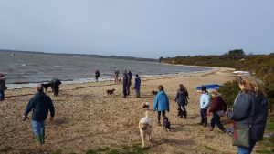 People and dogs enjoying a Dorset Dogs walkies at Lake Pier beach