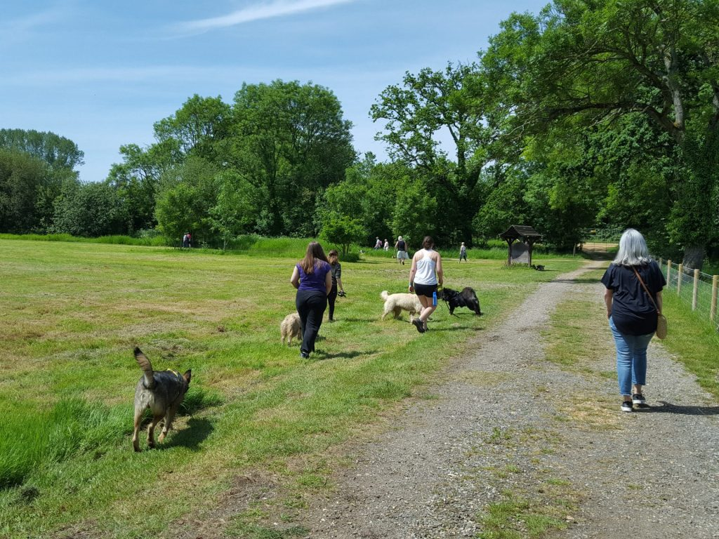 Dogs running across grass and people on the path with trees in the background