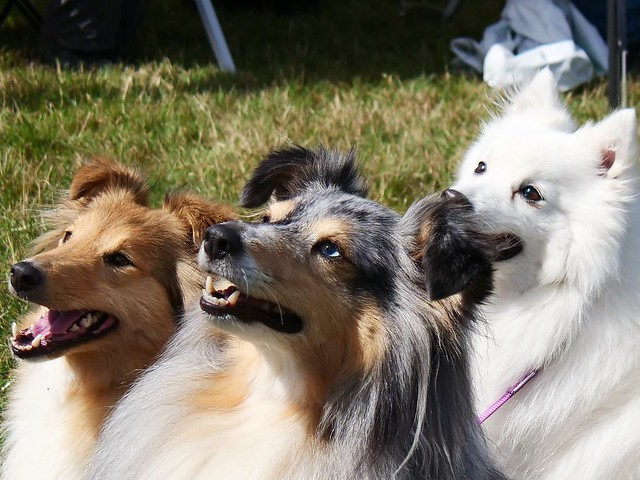 Expectant trio of dogs posing for a treat!