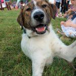 Theodore. Dorset Dog of the year 2019