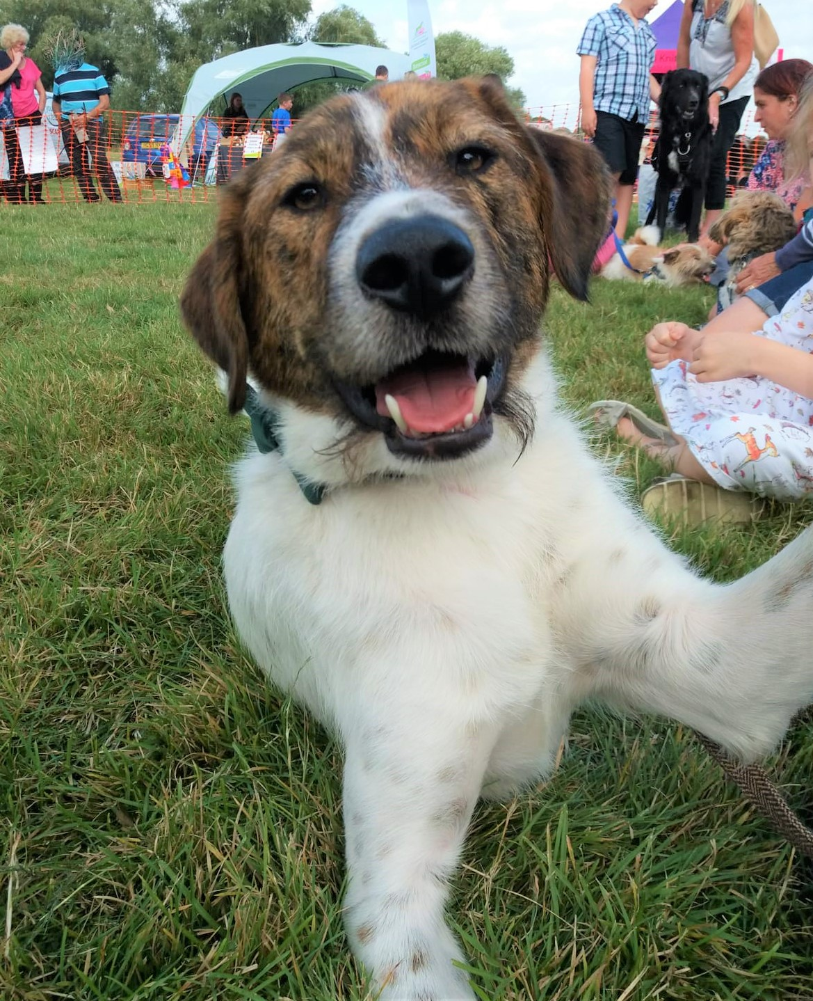Photo of Theodore Dorset Dog of the Year 2019 at Dorset Dogs Festival