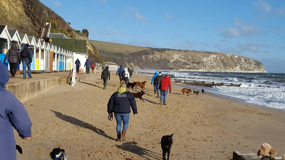 Dogs and people on the beach