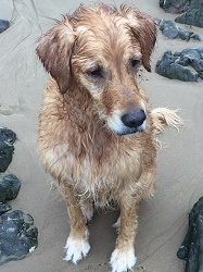 Goldie Oly looking very wet!
