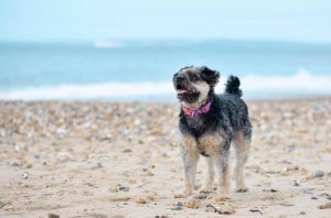 Lola at Fisheman's Walk-Southbourne beach