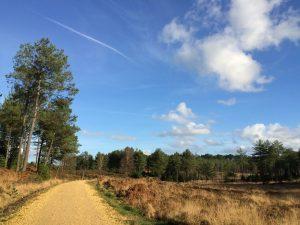 Track through Wareham Forest