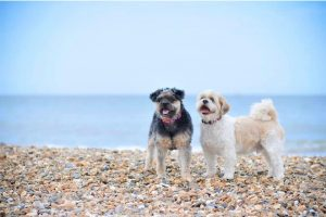 Dogs Lola-and-Buddy-at-Fishermans-Walk-to-Southbourne-dog-friendly-beach