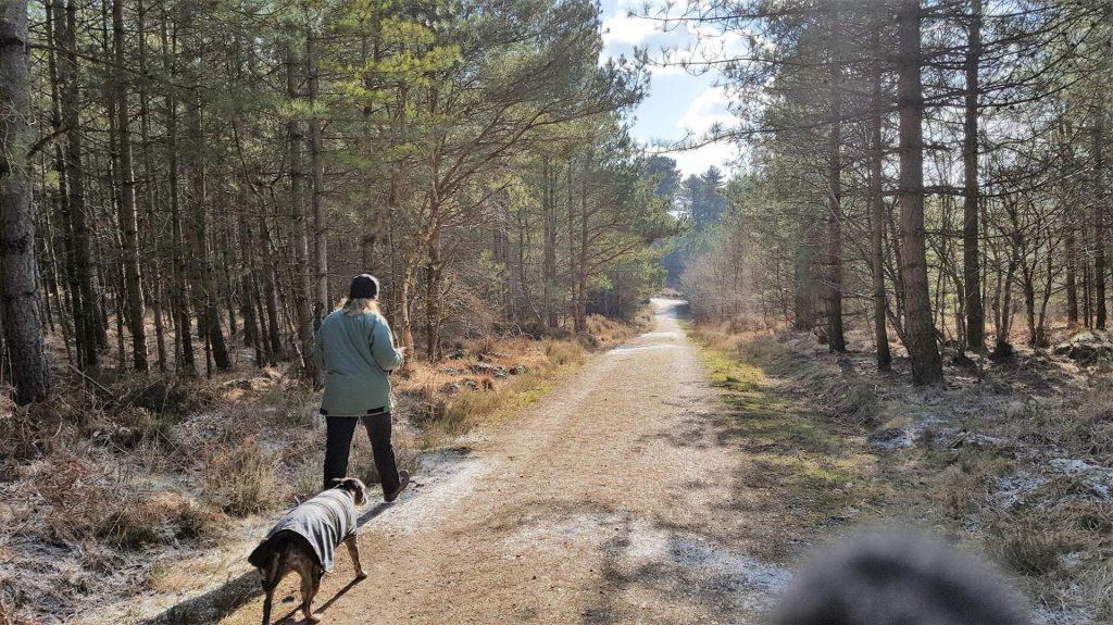 Linda and dog Tara walking at Moors Valley Forest