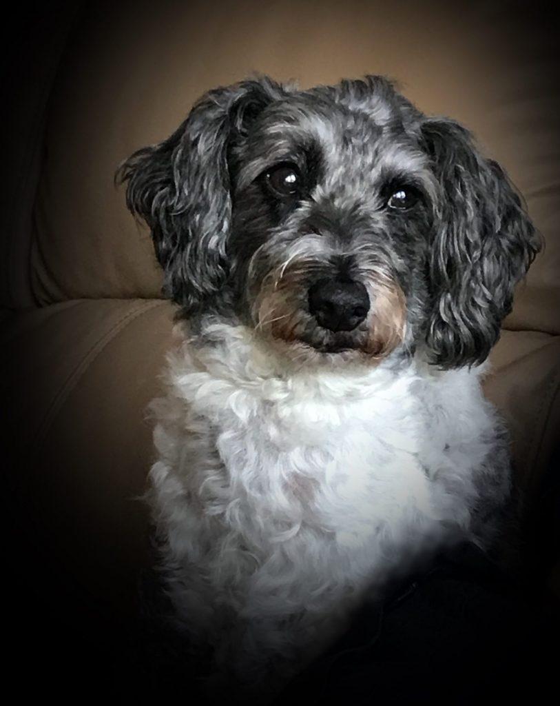 Photo of much-missed and beloved Bilbo
