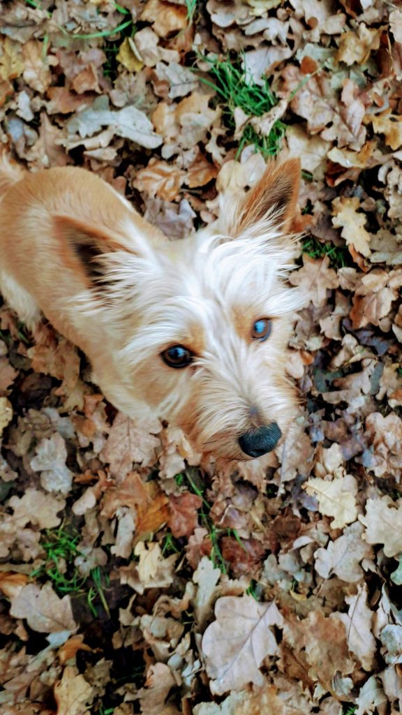 Photo of dog Clover sitting on leaves