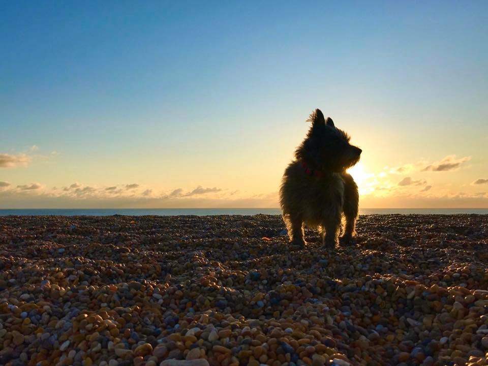 Photo of Tatty silhouetted on a pebbly sunset beach