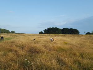 Lots of open space for dogs to run here!
