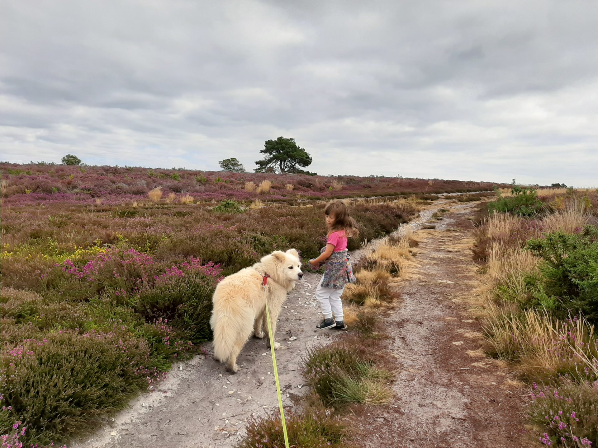Small child and dog on path in heathland under moody skies