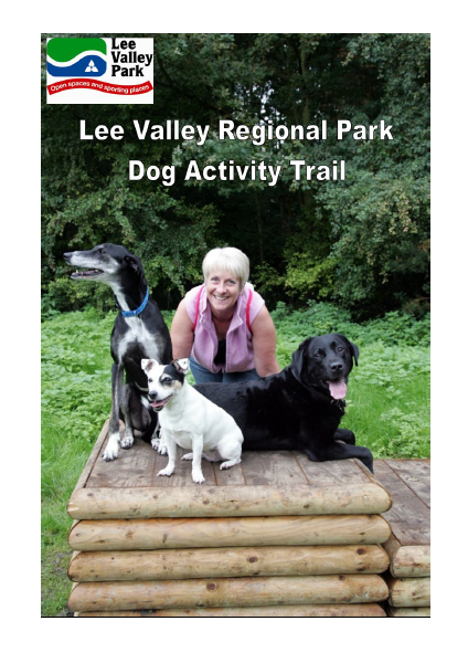 Person with 3 dogs enjoying activity equipment