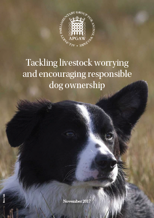 Report front cover with title and image of border collie