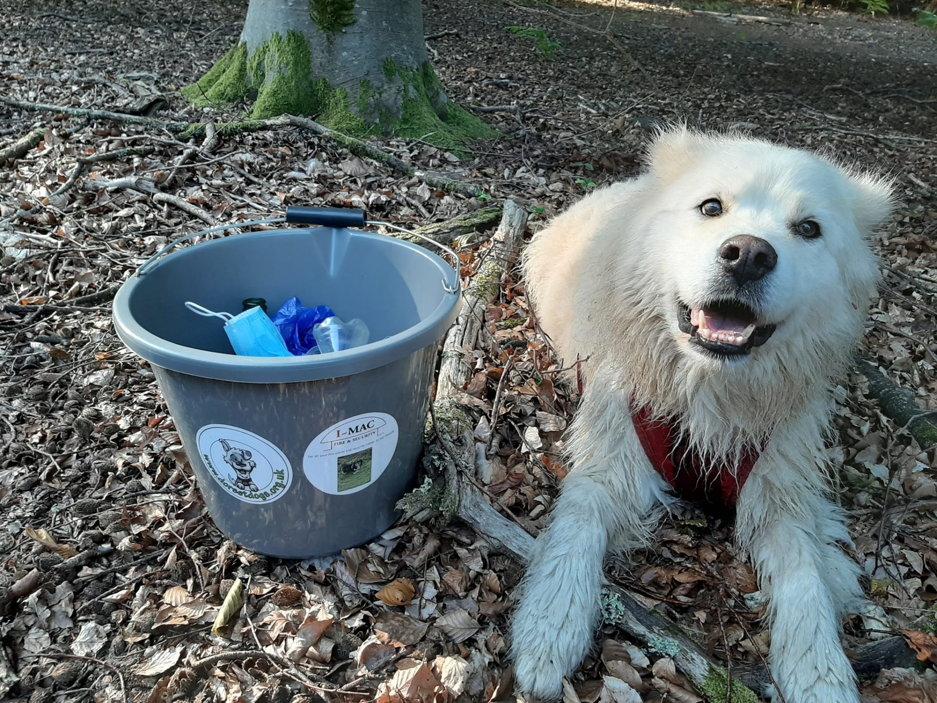 bucket of rubbish with big white fluffy dog sat next to it