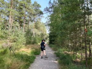 Person on a sunny woodland trail looking back